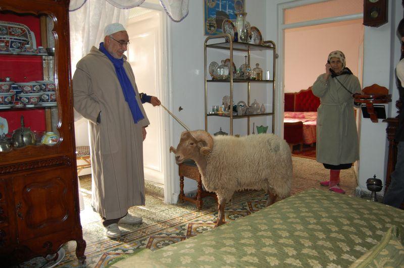 """Quand le Marocain s'investit en """"moutonnier"""" Dsc0083hadgetpousetlphonemouton"""
